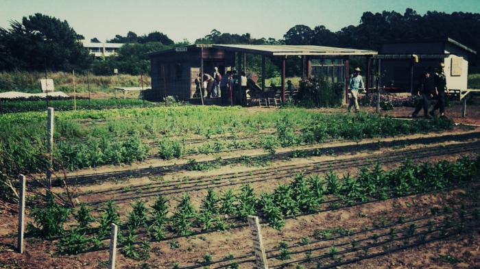 Social-Garden